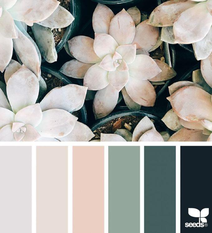多汁的色调|设计种子