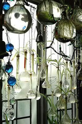 挂在玻璃烧瓶和烧杯中的植物。引人注目的美丽。