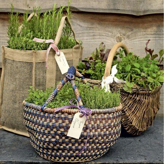 植物草药在篮子里