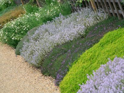DIYNetwork.com景观专家分享有关如何选择草地和植物作为草坪替代品的选择和地点的事实。