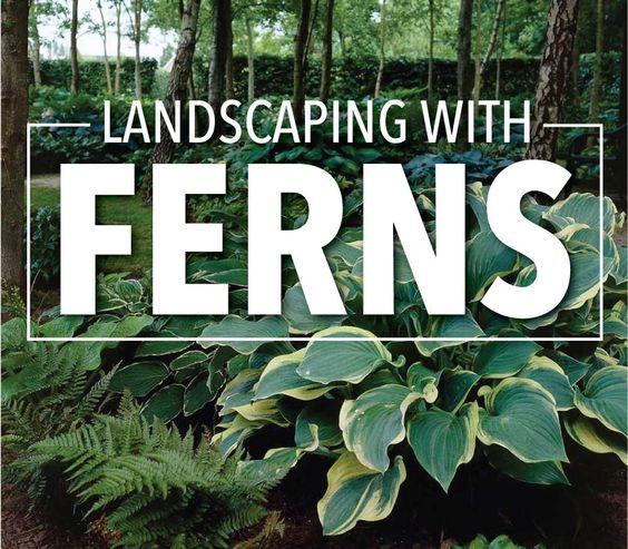 蕨类植物可以增强任何阴凉的花园或景观的美丽。了解如何种植和种植这些耐寒多年生植物,以及哪些品种是最好的。