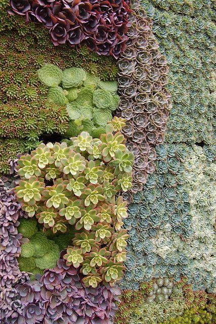 多汁的花园墙