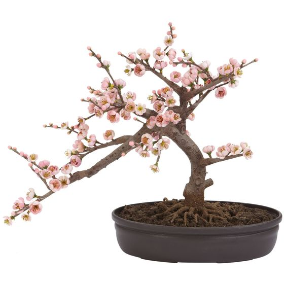 Cedar Bonsai Tree 24 in Treasure这款高度细致的雪松盆景之美。柔软的叶子和部分暴露的根系,这个迷人的两英尺高的树肯定会引起你的注意。它位于一个长方形的播种机中,里面装满了人造污垢,是办公室或小型生活空间的理想尺寸。朋友和家人都会很高兴收到这棵迷人的树作为任何场合的礼物。规格:高度:24 in宽度:16 inDepth:11 inPot size:W:12.5 in,H:4.5 in,D:8.5 in叶子数量:482