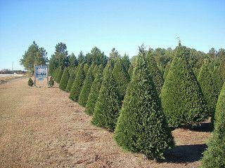 """考虑启动圣诞树农场?学习如何从""""圣诞树人""""开始树林农场和树木农业的来龙去脉。"""