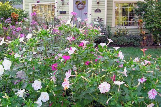 这些抗旱植物有颜色。谁说xeriscape美化必须是多肉植物?你也可以有颜色并节约用水。
