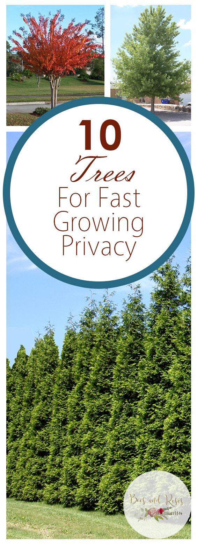 通过这些快速生长的遮荫树快速获得遮荫和隐私!