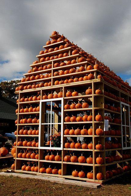 house of pumpkins