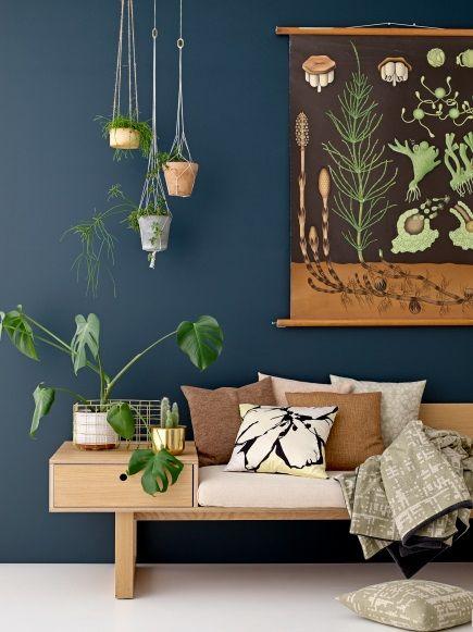 喜欢簇生的悬挂植物