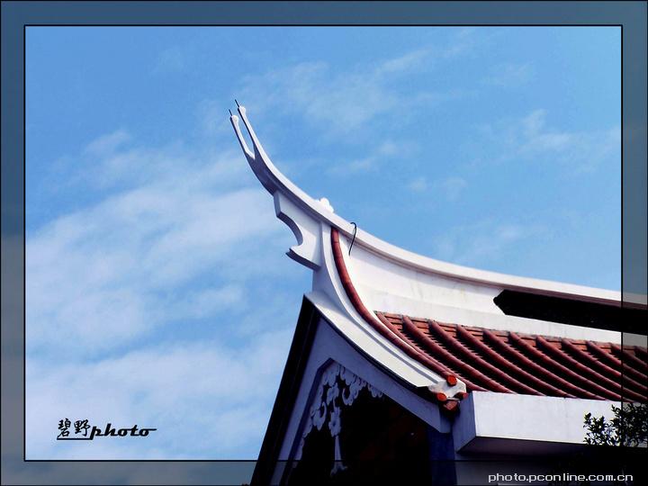 燕尾脊的 搜索结果_360图片