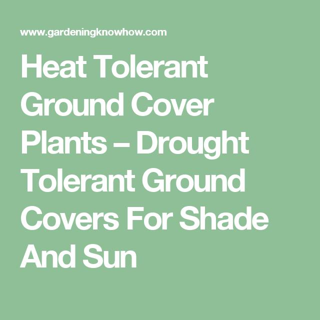 几乎可以在任何情况下找到耐旱植物,包括耐热的地被植物和能够承受干旱的地面覆盖物。在这里阅读有关一些最佳耐旱地面覆盖物的提示和信息。