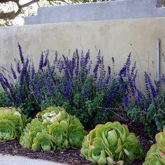 使用砂砾的地面覆盖思想...加州干旱的好主意!耐旱植物。