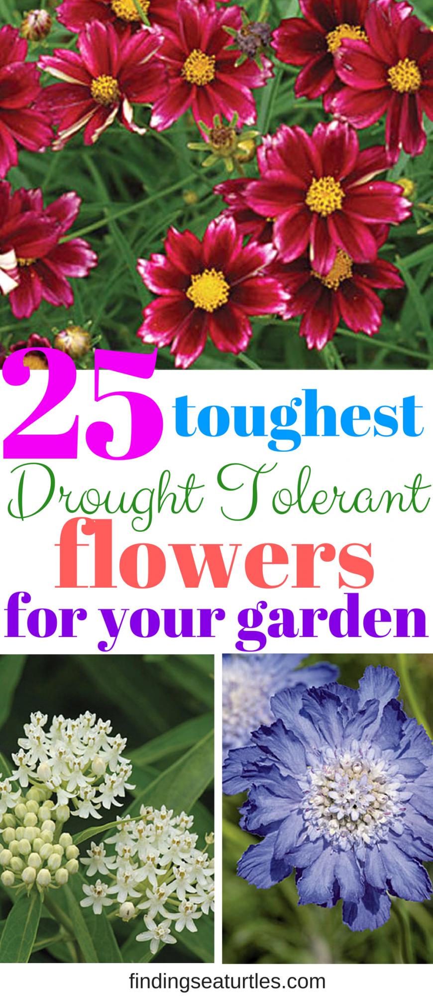 """""""如果您想为您的花园添加颜色,但由于水资源限制或短缺而不愿种植多年生植物,那么请考虑种植抗旱多年生植物。这些是多年生植物,一旦你建立它们,需要较少的频繁浇水。一些多年生植物要求阅读更多"""