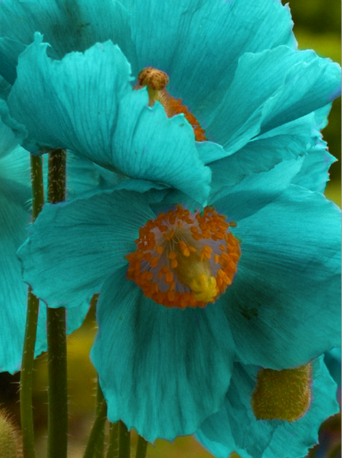 touch-of-turquoise:
