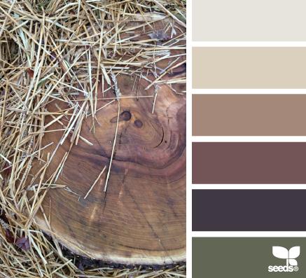 质朴的色调 - 设计种子