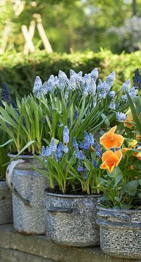 想让你的花园更加难忘?融合这些简单而重要的景观设计理念。