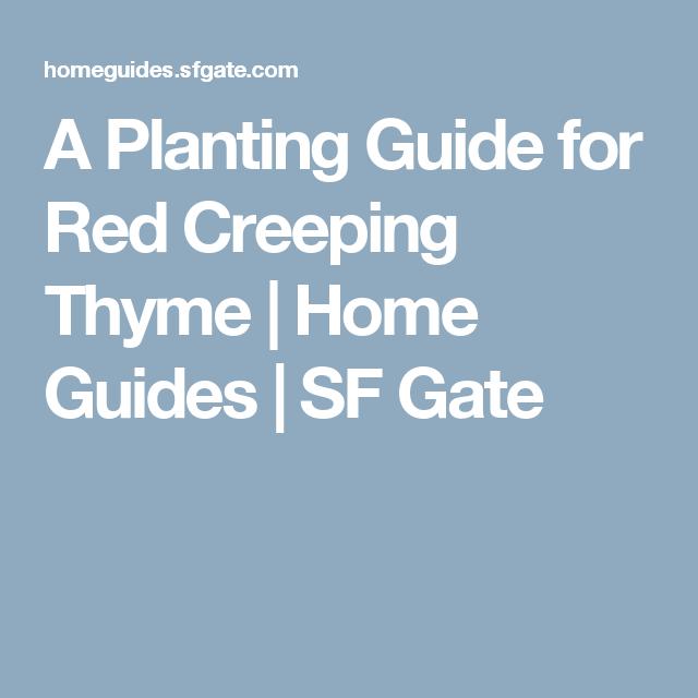"""一种低生长,蔓延的植物在整个夏季都有紫红色的花朵,红色爬行百里香(Thymus praecox""""Coccineus"""")的高度只有3至6英寸,但是宽度为12至18英寸。虽然它是一个缓慢的种植者,它成为沿途的有效地面覆盖物或填补大..."""