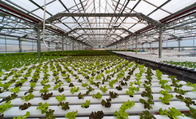 Americas first commercial scale rooftop greenhouse farm built in New York City!