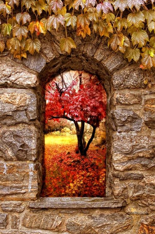 - 秋天的窗户 - 树木,树叶和石头的棕色,红色,橙色和黄色秋季景观