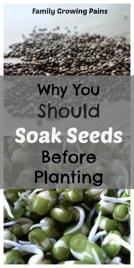 对种子进行浸种是许多新的园丁忽视或从未知道尝试的一种古老伎俩。使用这个技巧应该会减少种子发芽需要多长时间。