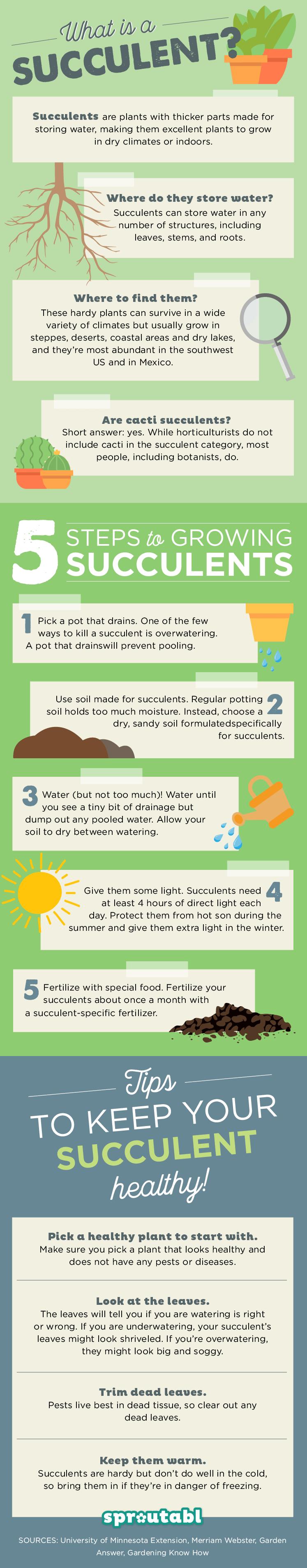 多汁植物护理和种植技巧多汁植物喜欢干燥的条件,明亮的阳光和沙质土壤。当你种植多肉植物时,弄清楚如何在太多和不足够的水之间取得适当的平衡可能很困难,因为可以确定他们需要多少阳光。多汁植物的确切要求取决于......