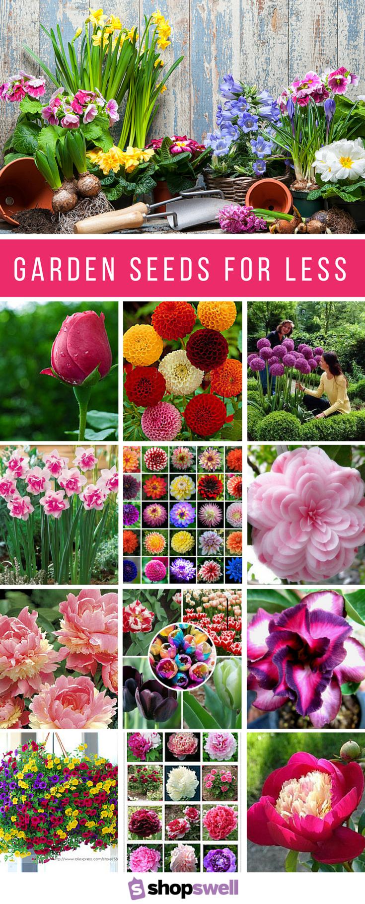您不一定要付出高昂的代价才能获得优质的花园种子。这18种花卉种子包价格非常便宜,并有评论证明它们将在您的花园中生产出美丽。现在购买种子收藏!