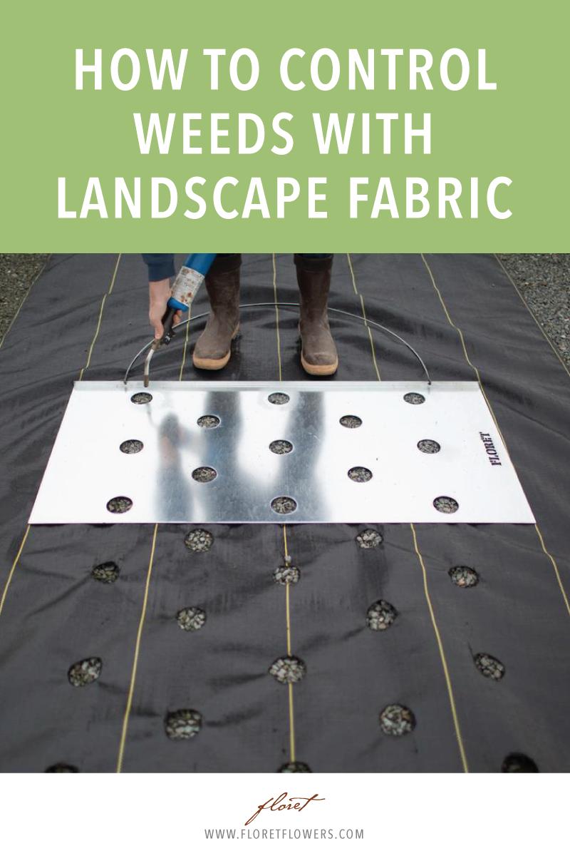 了解如何使用景观布料来节省时间并为切花园提供自然杂草控制。