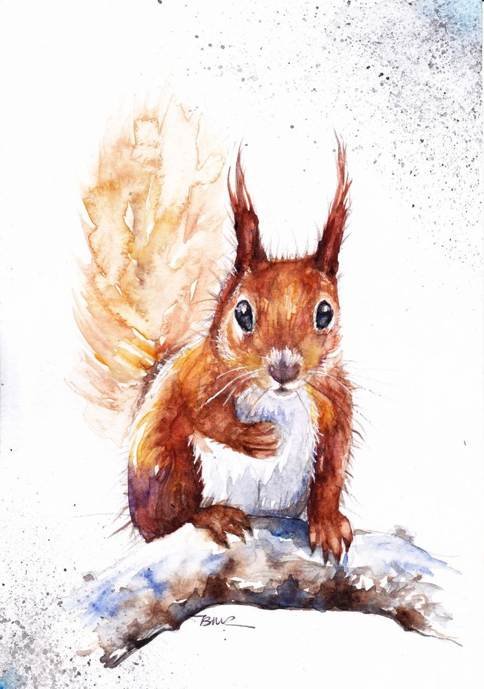 Original Watercolour Painting by Be Coventry,Animals,Realism,Red Squirrel