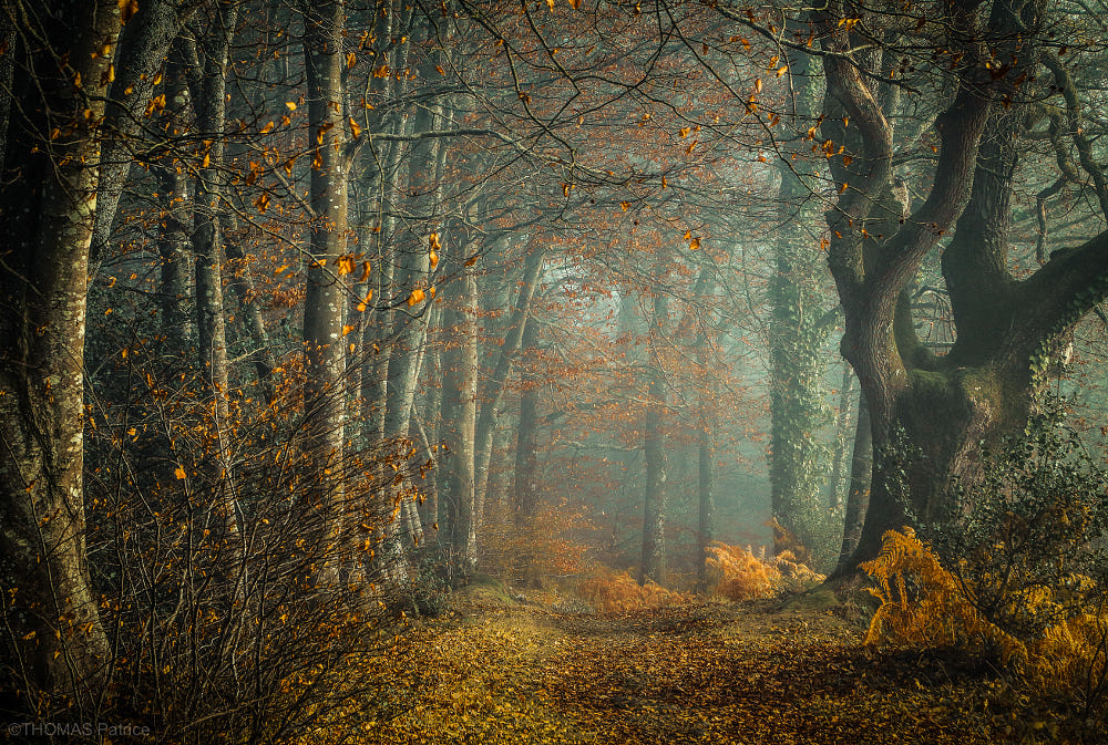 Mystical forest!