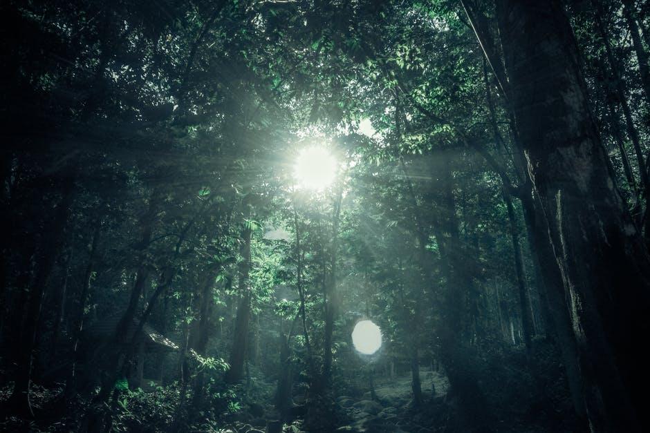Green Rainforest Under Sunny Day