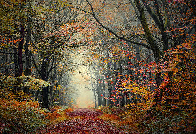 Colorful forest!
