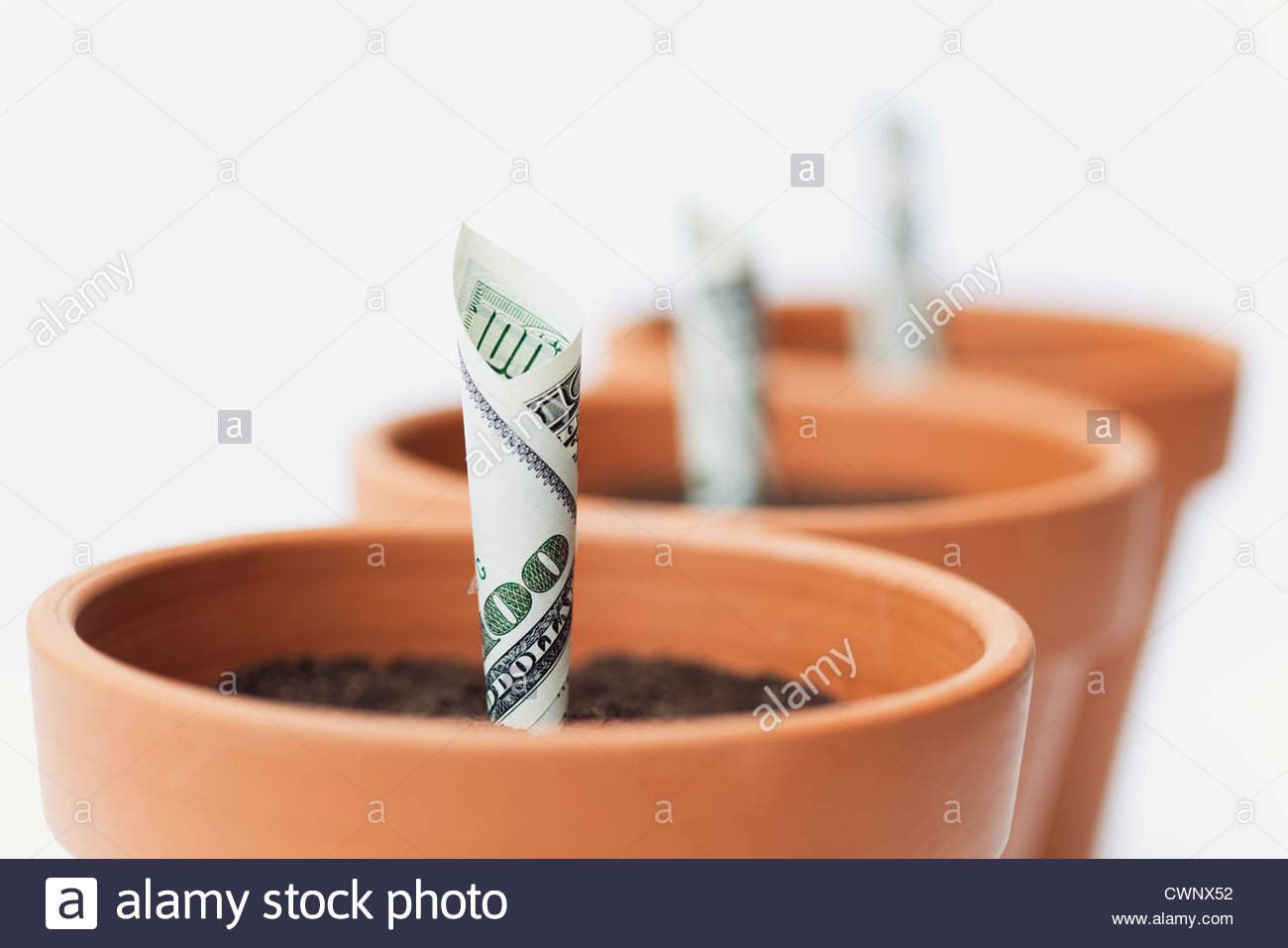 One-hundred dollar bills planted in flower pots - Stock Image