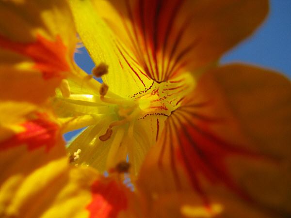 flower, flowers, closeup, flora, plant, petal, pet