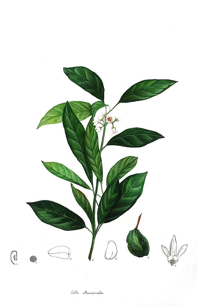 Botanical Illustration Vol. 5