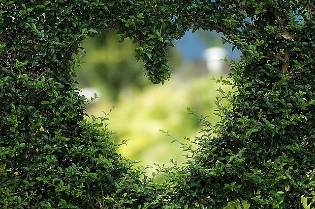 heart herzchen love romance luck valentine's day romantic valentine plant background heart heart love love love love love