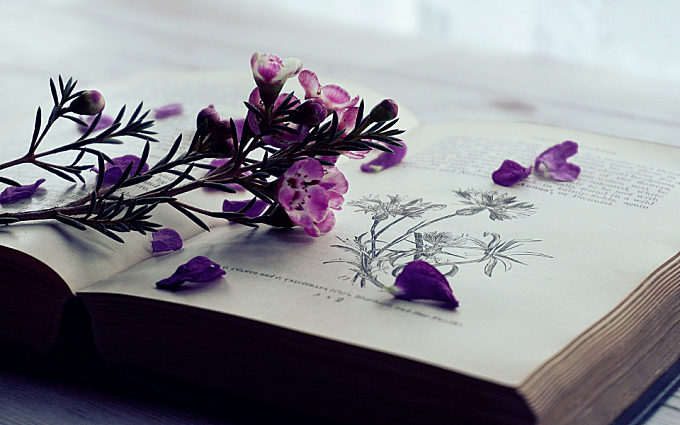 flowers,  books,  old books,  vintage,  reading,  nature,  wax flowers,  floral,  gardening