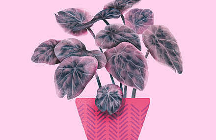 Lovely and Playful Plants
