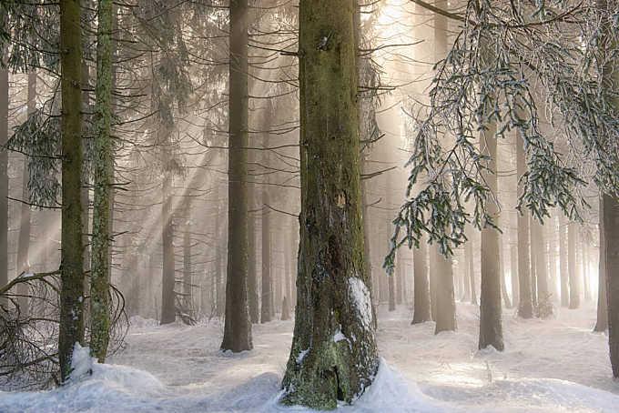 Winter Wonders II