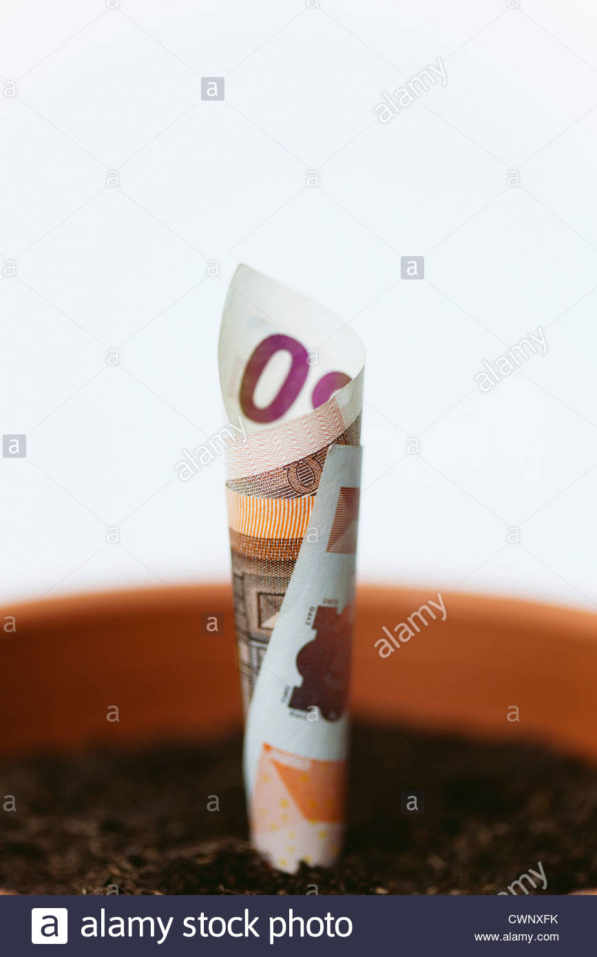 Fifty euro banknote planted in flower pot - Stock Image
