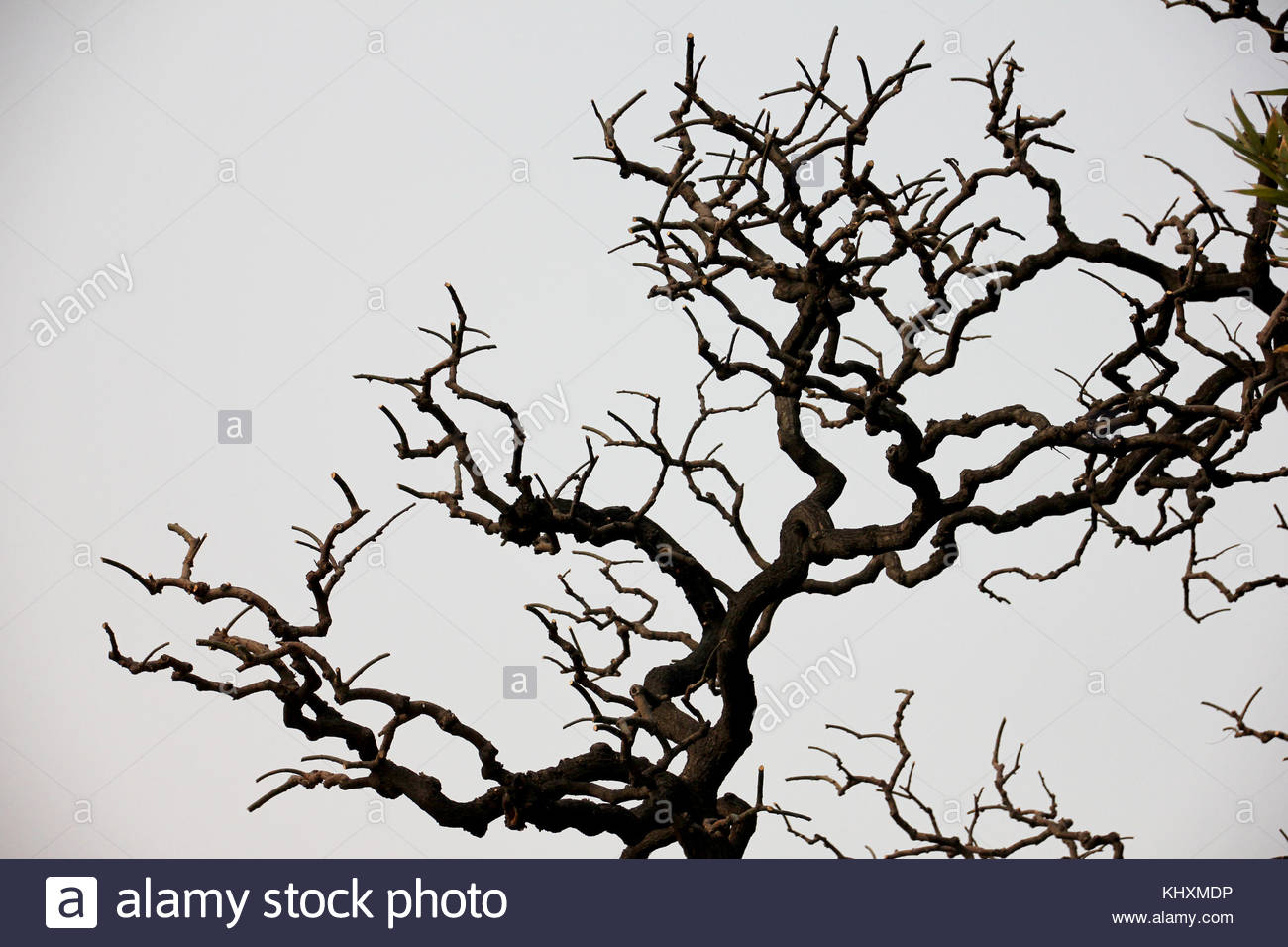 The old tree - Stock Image