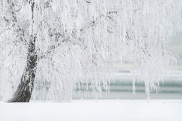 winter, tree, snow