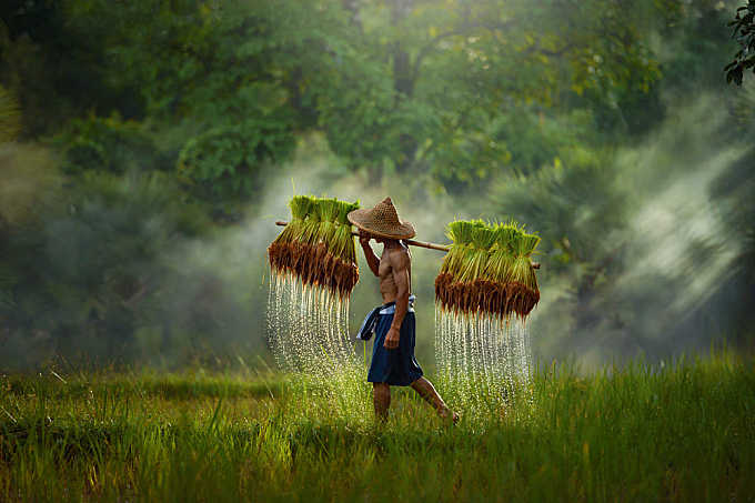 The farmer,Thailand