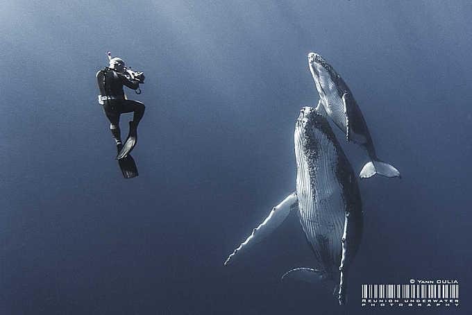 Whisper to humpback whales