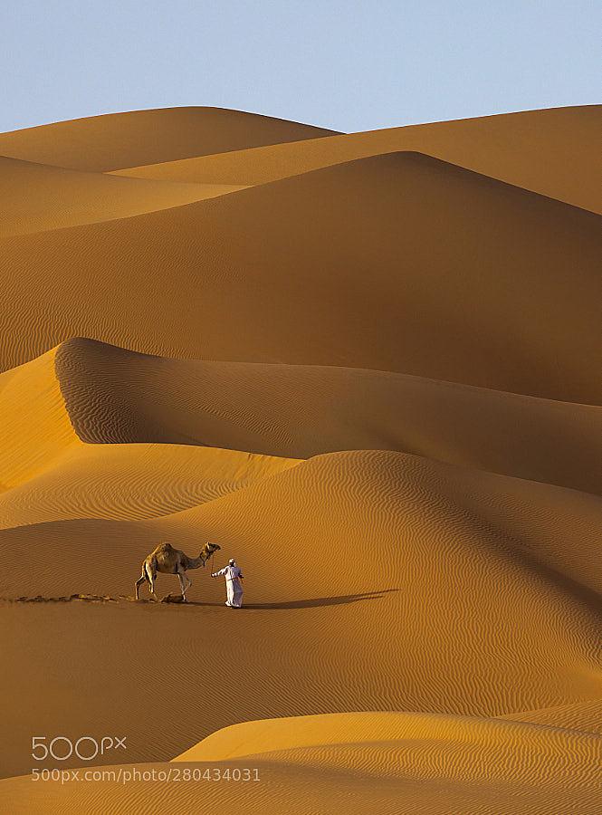 beauty of the desert dunes