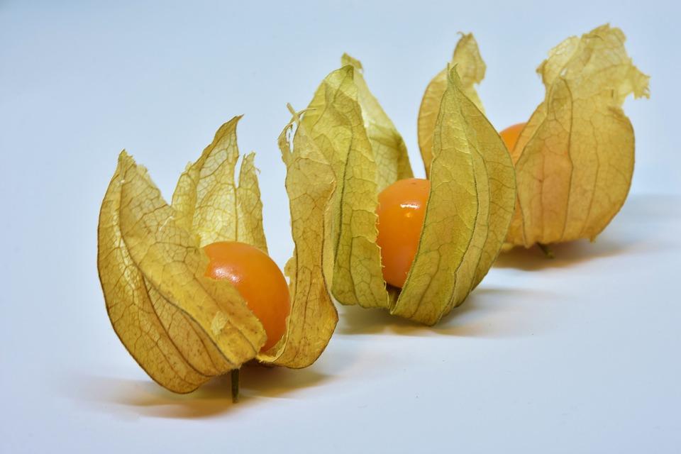 酸浆, 水果, 浆果, 橙, 食品, 健康, 维生素, 装饰, 关闭