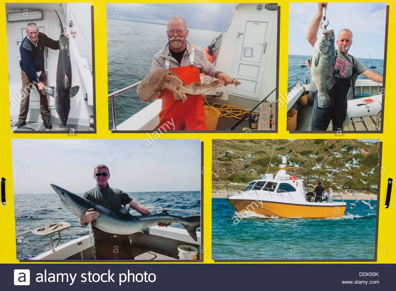 England, Cornwall, Padstow, Poster Advertising Fishing Trips - Stock Image