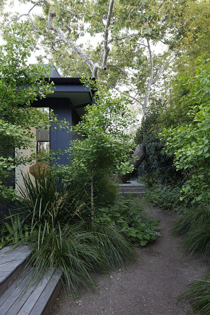 Landscape Architect Visit: A Majestic Sycamore in a Santa Monica Garden