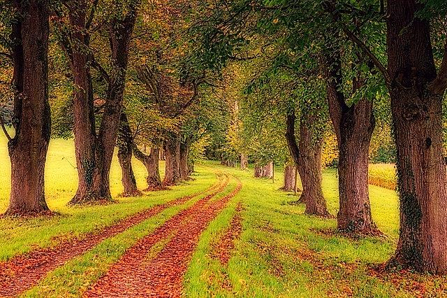 tree, avenue, nature
