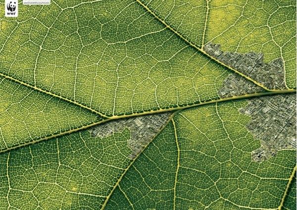 WWF环保创意公益广告设计-公益海报设计-设计欣赏-地球就像一片树叶,破坏性的人类活动使得它如同虫蛀一样,停止破坏我们的自然环境,保护地球。<br/>