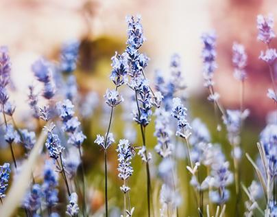 Colorus Magica - Ukrainian summer