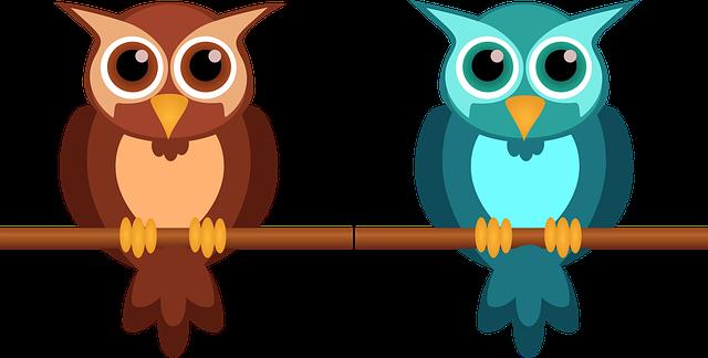 owl, cute, nocturnal